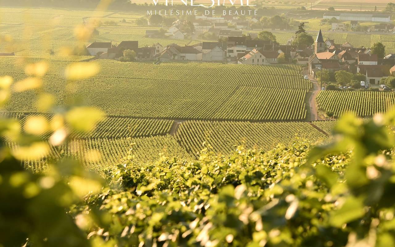 vignes dégustation vin Bourgogne