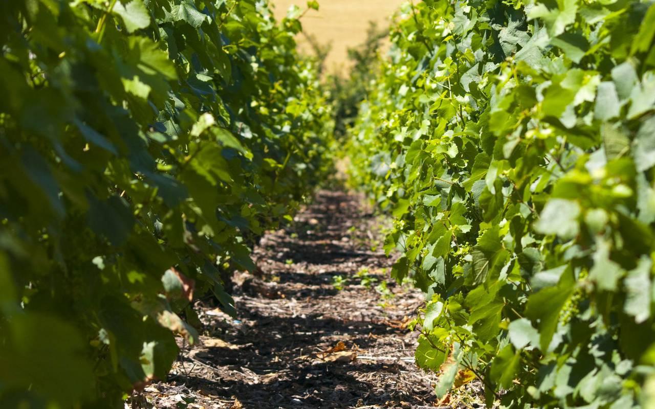 Vignes week end insolite bourgogne