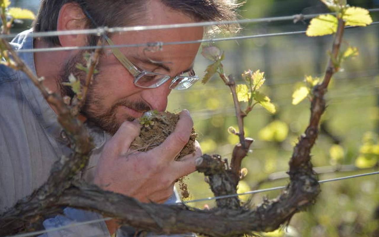 homme dans les vignes vin de bourgogne