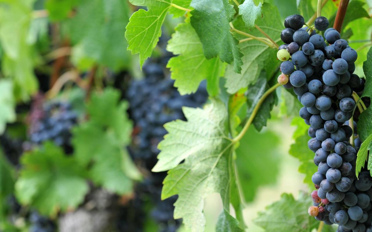 Vignes week end romantique bourgogne