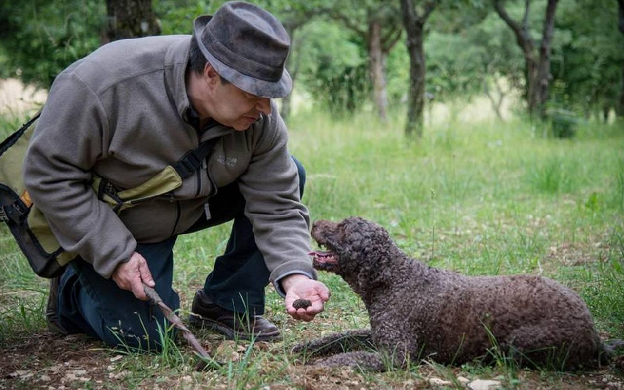 Homme et son chien hôtel spa cote d or